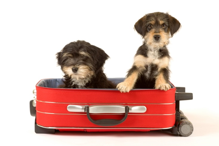 smuggling dogs in a suitcase is a crime